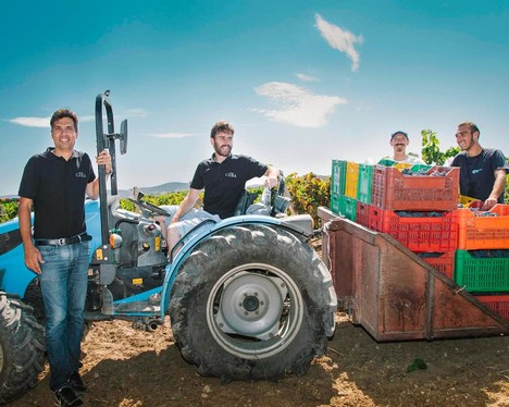 Italian winermakers in an Italian vineyard with a tractor and crates of freshly harvested grape bunches.