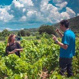 In Cantina Giba vineyard, Andres tells the history of the vineyard